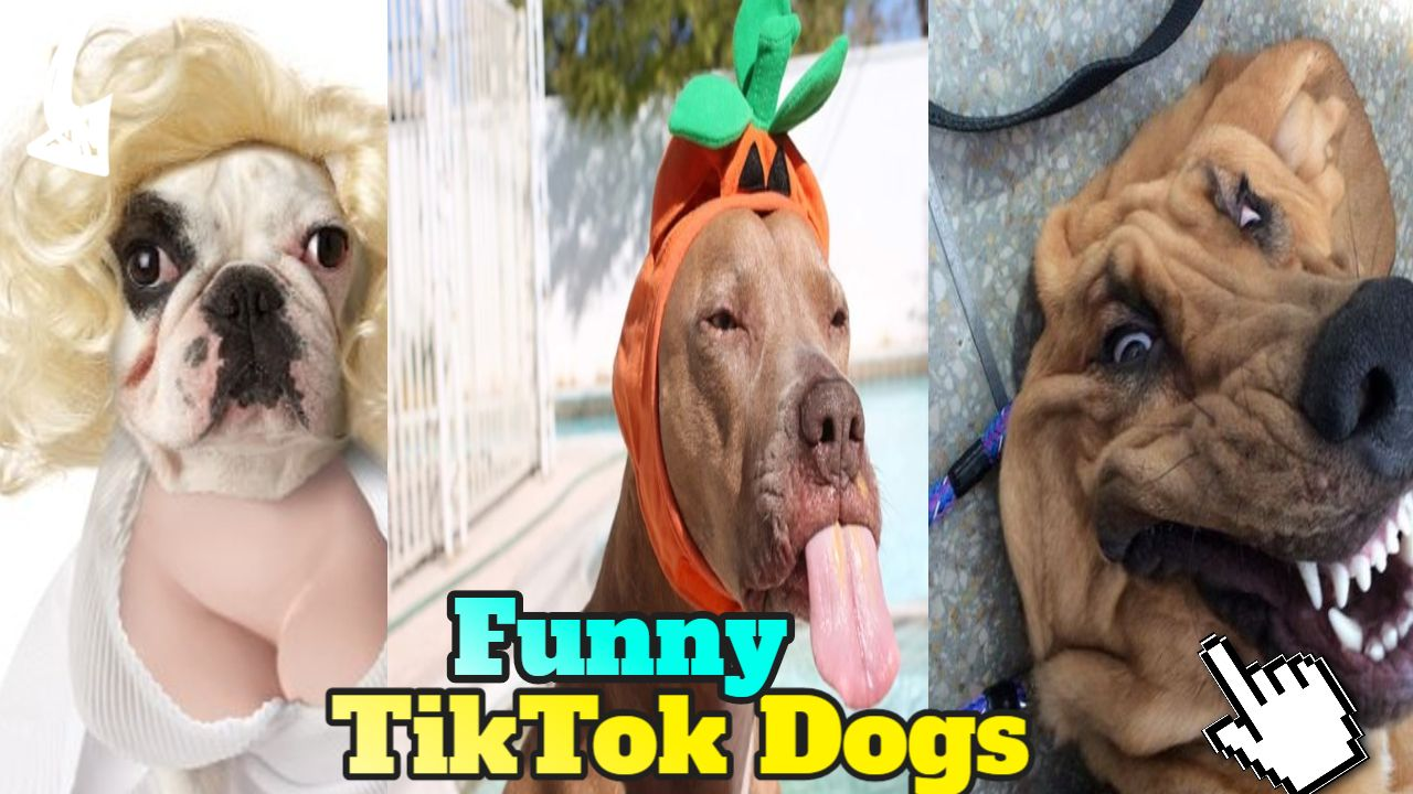 Funny Dogs Tiktok Compilation April 2020 Dogs Easy Food To Make Funny Dogs