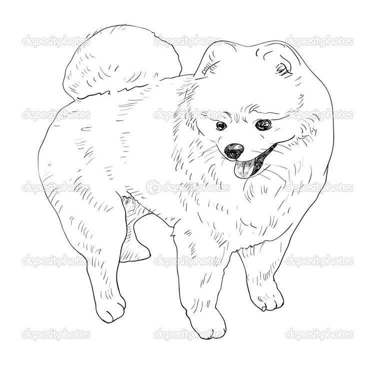 Pomeranian My Pet Dog Coloring Pages