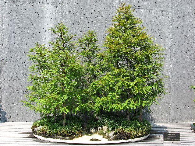 Bonsai Forest I