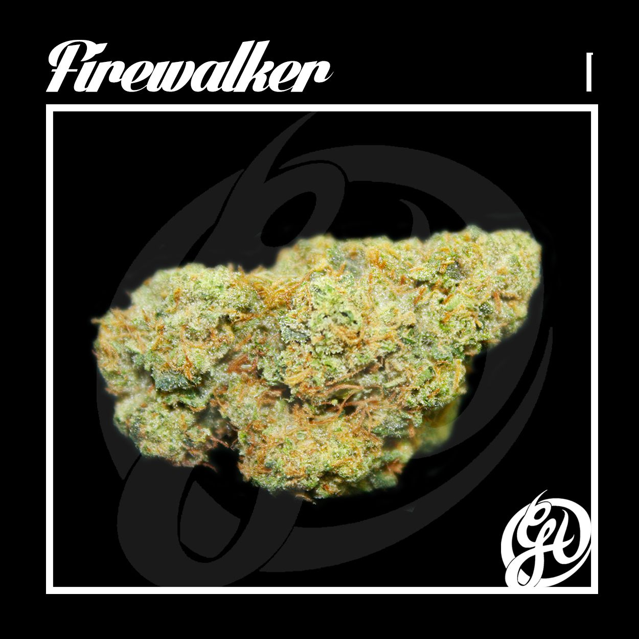 Firewalker just blazed its way in, and its lookin' HOT! This Indica is definitely a strain with a heavy high. Perfect for anybody who needs to decompress and relax. Insomnia is no match for the Firewalker. Come in and check it out. Only at the #GreenhouseHC #greenhouseherbalcenter #mmj #medicalmarijuana #thc #cbd #indica #sativa #bud #greens #nugs #maryjane #ganja #smoke #toke #puffpuffpass #cannabiscommunity #highsociety #instahigh #instaweed #legalize #lifted #hollywood #dispensary…