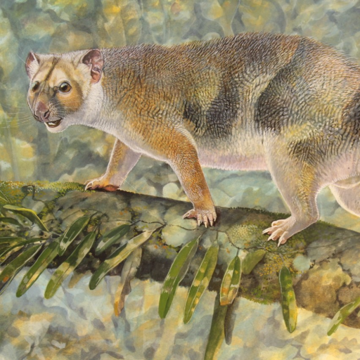 Scientists intrigued by 'possumlike' lion fossil