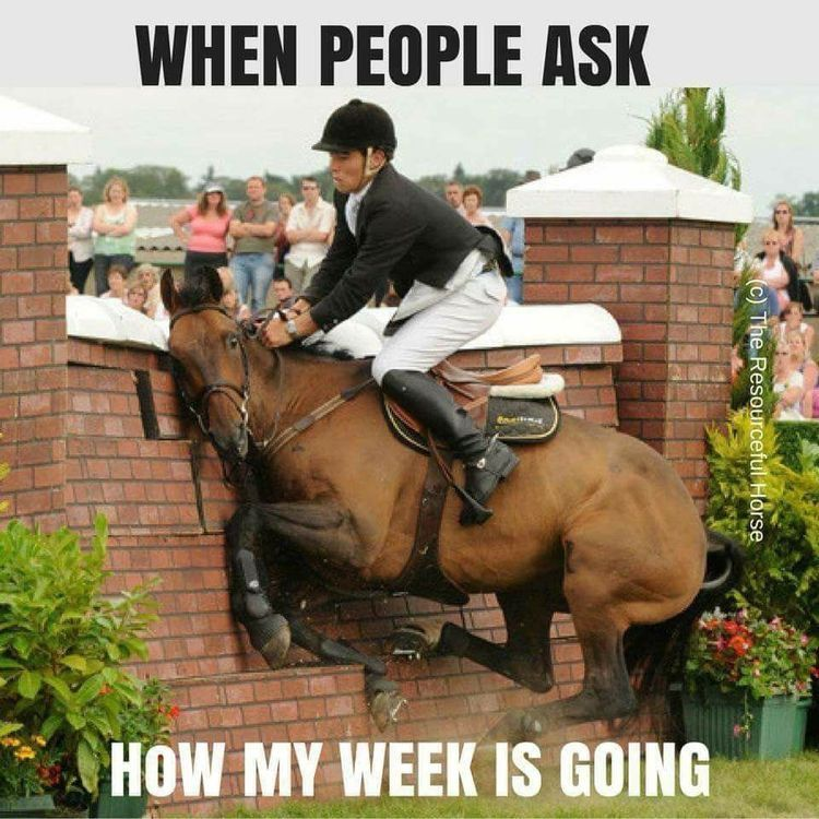 When People Ask How My Week Is Going Funny Horse Pictures Funny Horses Funny Horse Memes