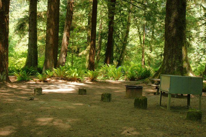 Elk Prairie Campground in Redwood National Park