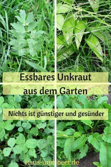Im Garten wächst essbares Unkraut – Haus und Beet