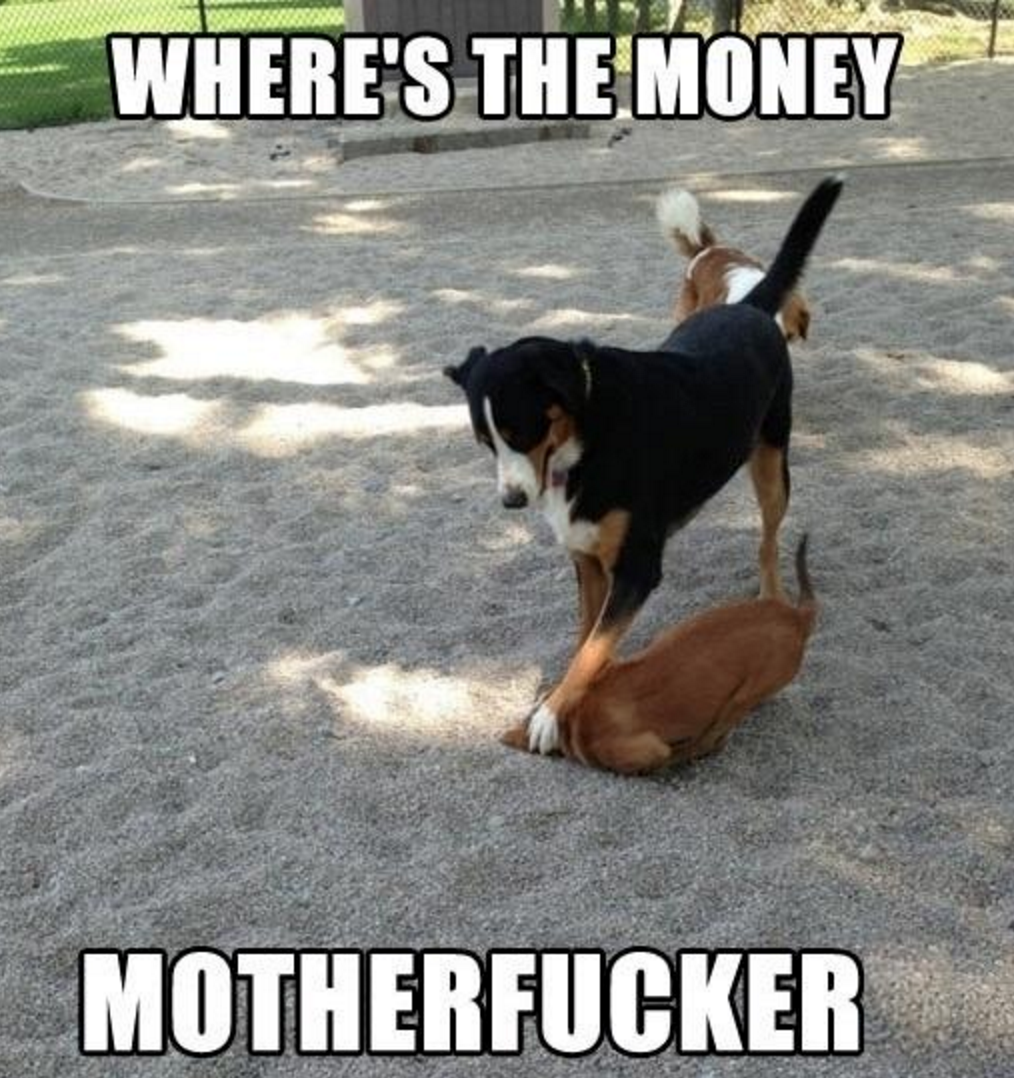 Dog Debt Collector Wheres The Money Motherfucker Animal Meme