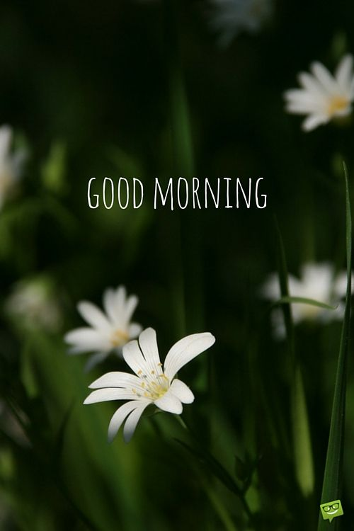A wish for the new day good morning good morning pinterest good morning mightylinksfo