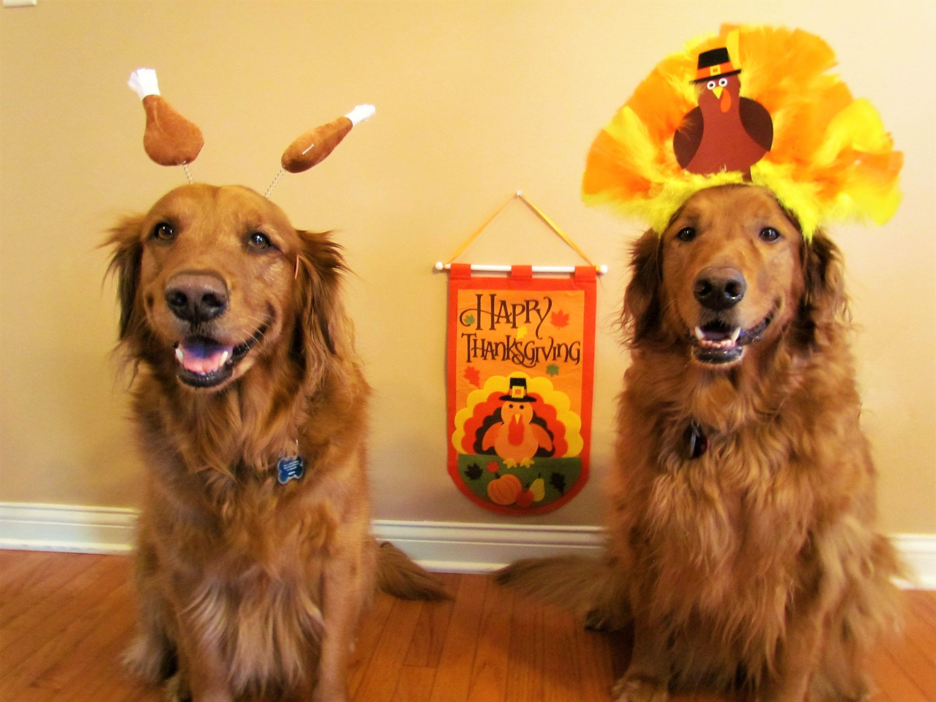 Happy Thanksgiving from Marley and Sadie! Dog love