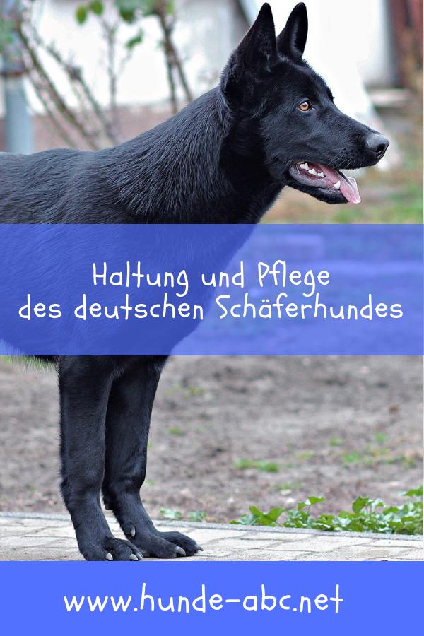 Vom Hutenhund Zum Hausgenossen Der Schaferhund Hunde Hunde Rassen Hunderassen