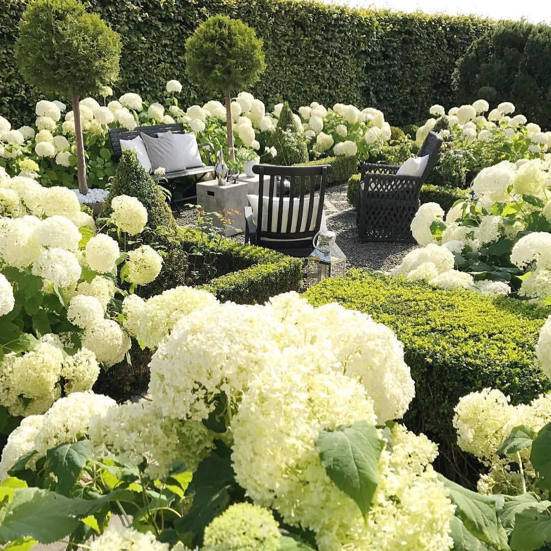 Debby Botanica Trading Hydrangea Heaven There Is No Doubt That Mass Planting Of Hydrangeas Is The Best Way Beautiful Gardens White Gardens Garden Planning