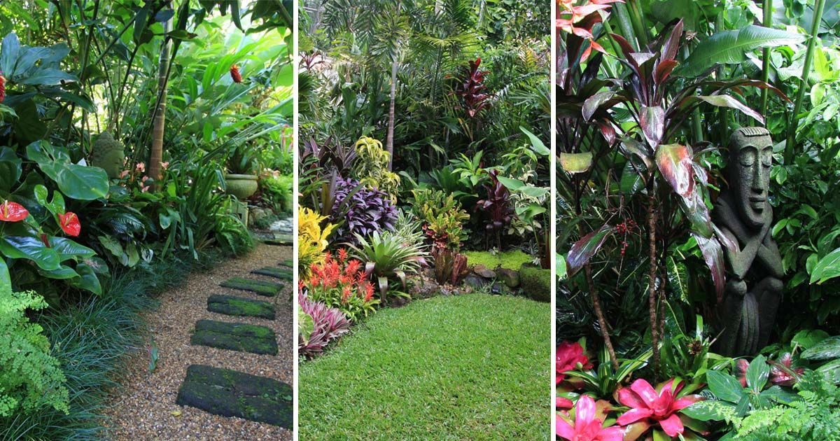 Top Tropical Backyard Garden Ideas Tropical Backyard Backyard