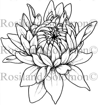 Dahlia Bud Half Opened - Digital Stamp   tattoo   Pinterest ...