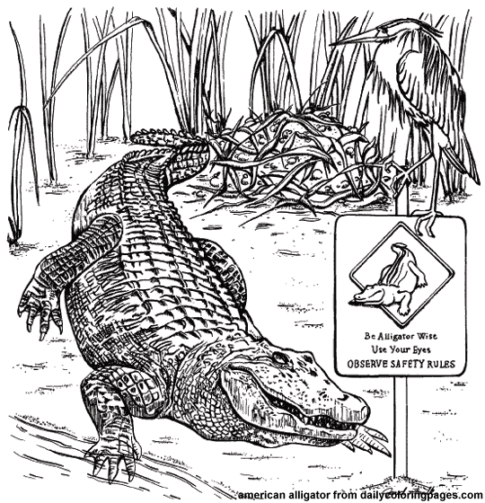 Texas American Alligator Animal Coloring Pages Png 540 560 Pixels Animal Coloring Pages Coloring Pages Coloring Sheets
