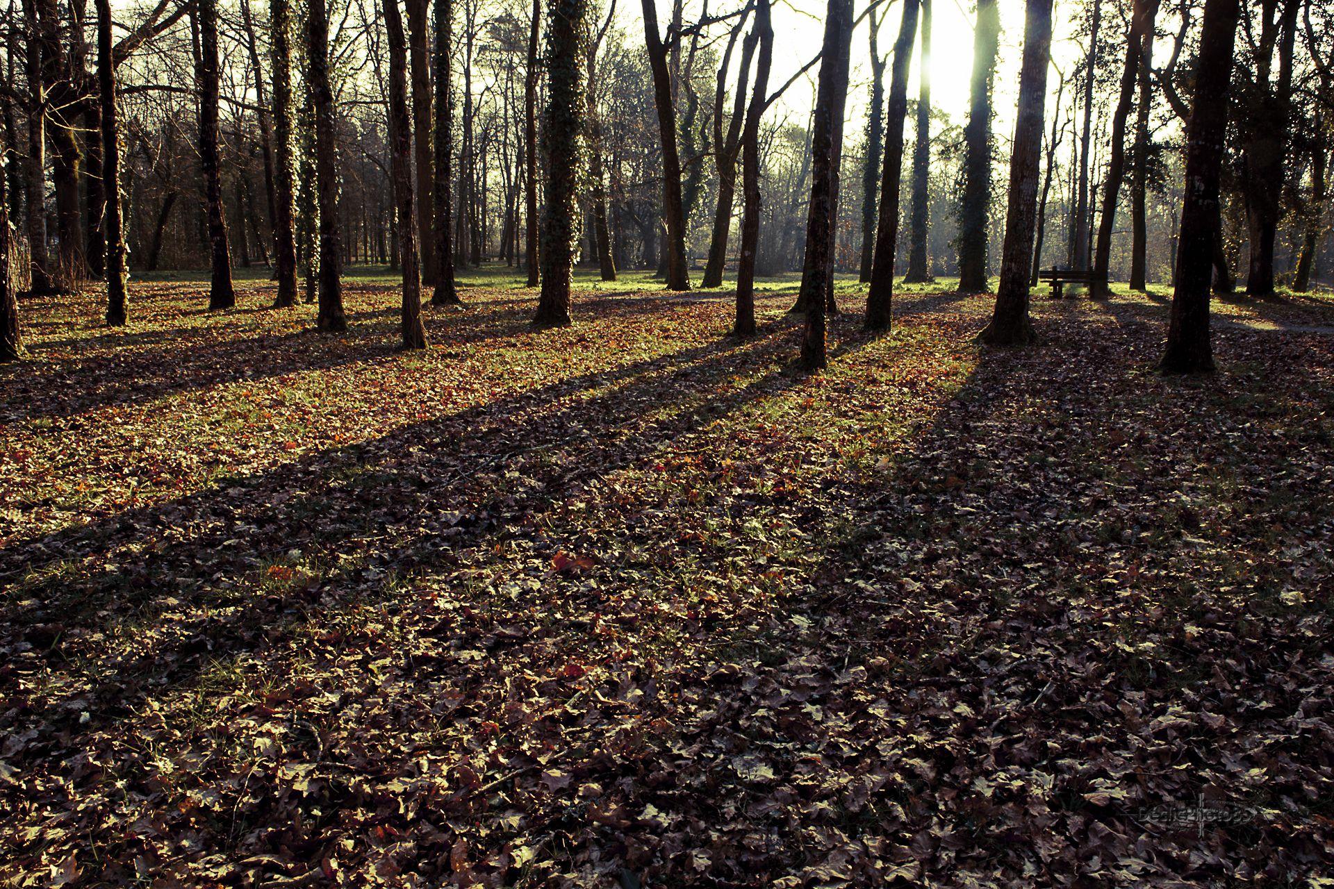 Bois des Bourbes. Challans