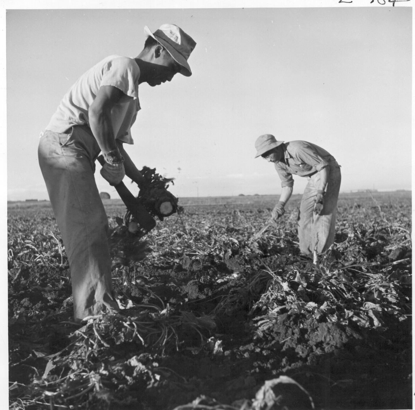Japanese American Farmers Google Search Huntington Beach