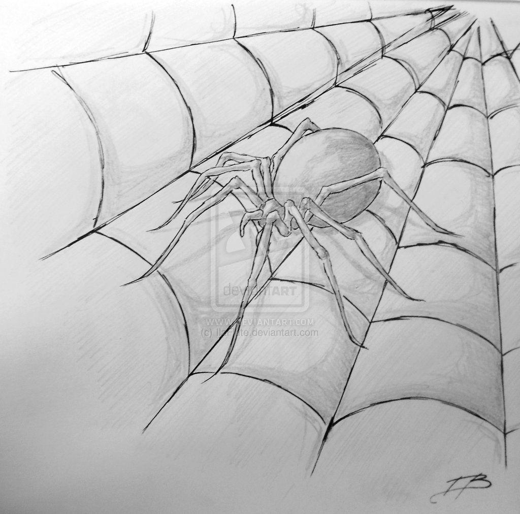 учат картинки пауков на паутине нарисовать также может