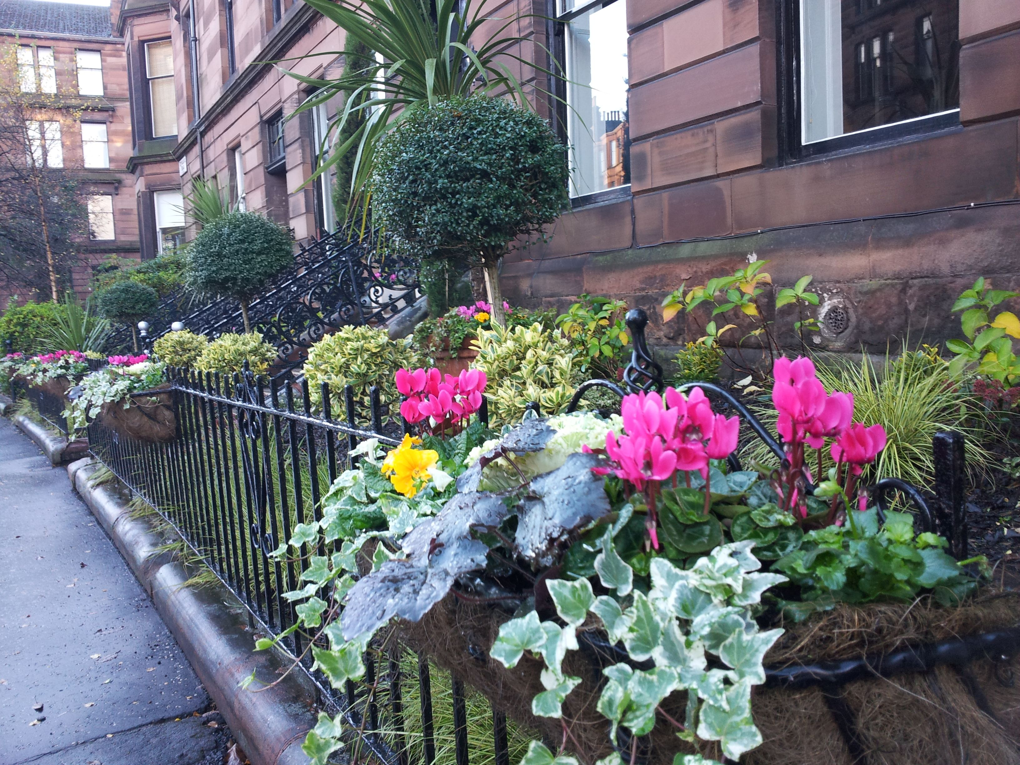 Bright and cheerful winter planting in Hyndland, West End ...