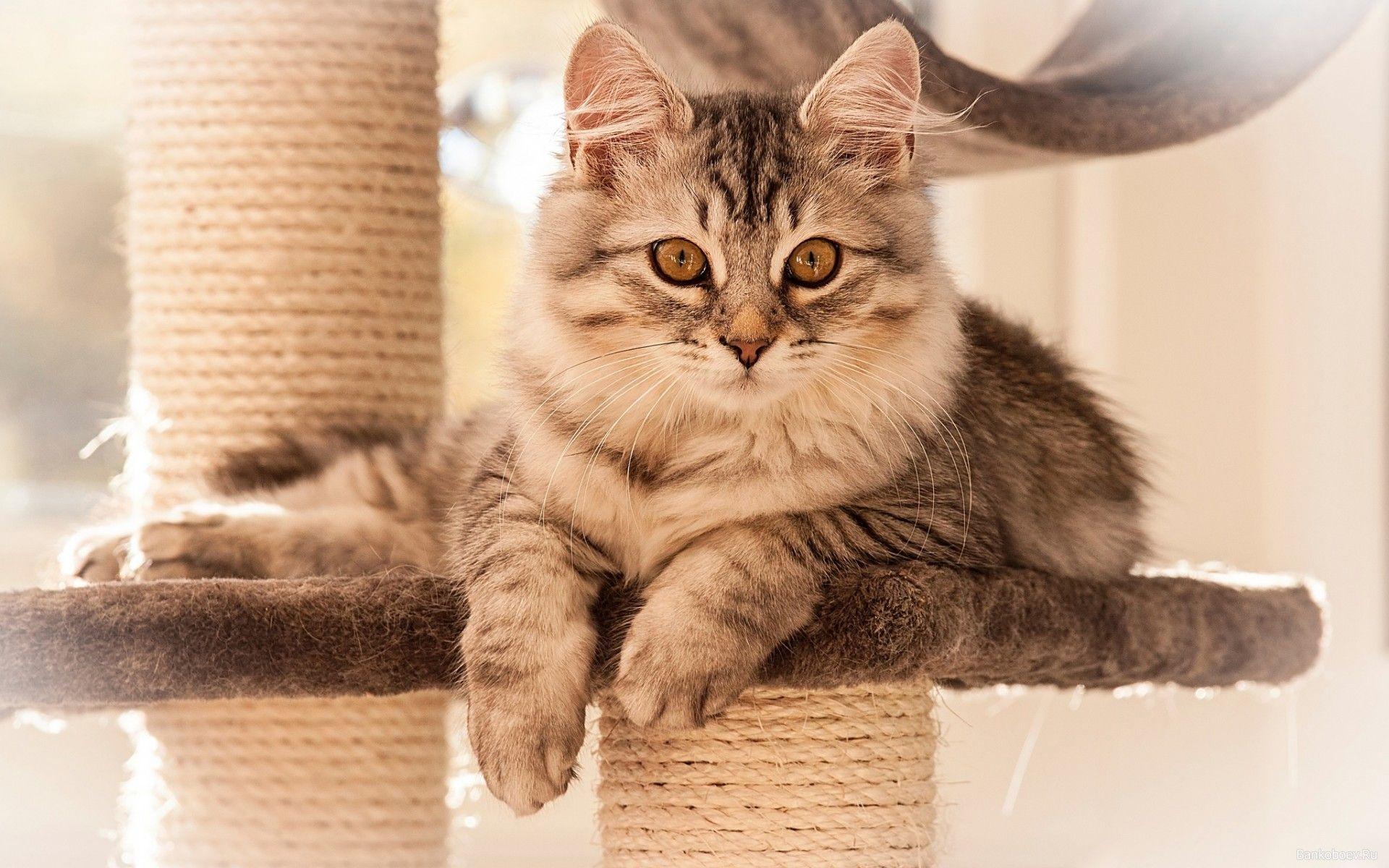 большинство кошки обои и картинки на рабочий стал судебный