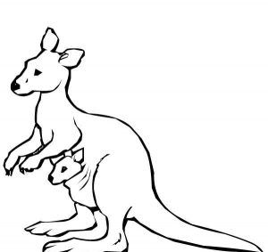 Kangaroo Coloring Pages For Kids Preschool And Kindergarten Animal Coloring Pages Kangaroo Drawing Zoo Animal Coloring Pages