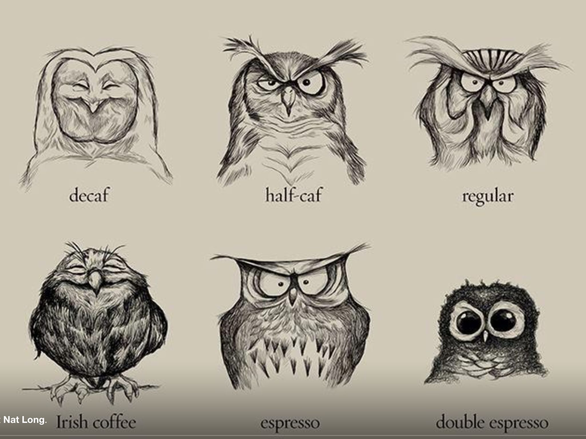 Funny Pictures About Caffeinated Owl Chart. Oh, And Cool Pics About  Caffeinated Owl Chart. Also, Caffeinated Owl Chart Photos.