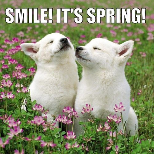 18 First Day Of Spring Memes So You Can Start The Season Off Firstdayofspring 18 First Day Of Spring Memes So You Fir Funny Animals Cute Animals Animals