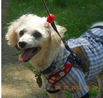 Fröhlicher Anfang Rudy Hund lächelnd, Tiere und Hund
