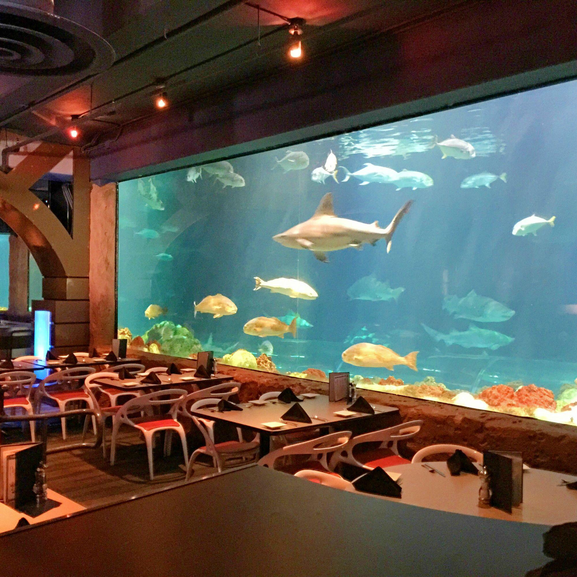 Besten Restaurants In Seaworld Orlando