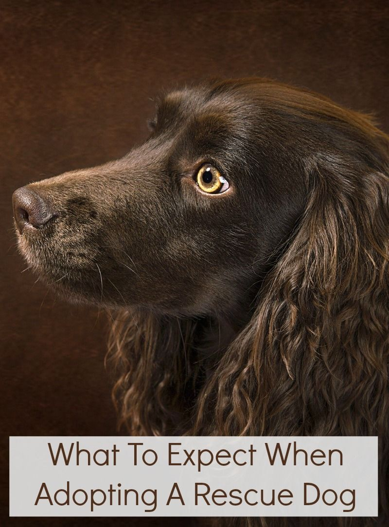 What To Expect When Adopting A Rescue Dog Rescue Dogs Dogs Up For Adoption Dogs
