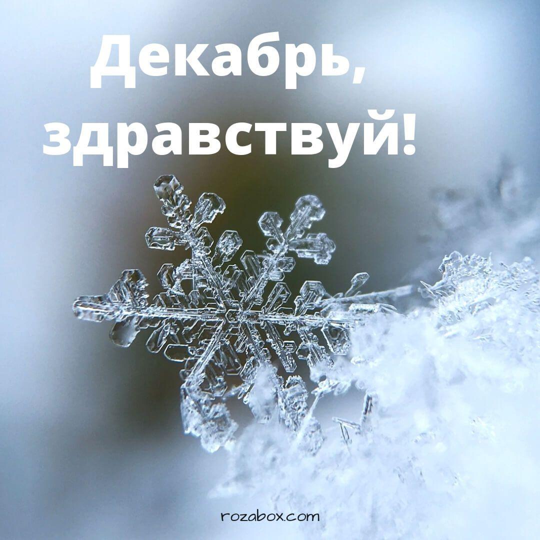 Fotografii Privet Dekabr S Izobrazheniyami Privet Dekabr