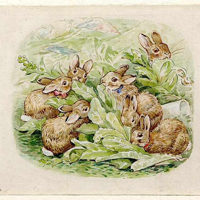 @ britishmuseum - Beatrix Potter was born #onthisday 150 years ago. Known for her series of children's books and illustrations, her stories followed the exploits of Peter Rabbit and Benjamin Bunny among other countryside characters. Here is an illustration from 'The Tale of the Flopsy Bunnies'. It shows the rabbits munching on some lettuce in Mr McGregor's rubbish heap after Peter Rabbit didn't have enough food to share around. #Beatrix150 #rabbits #illustration #BeatrixPotter #Pete...