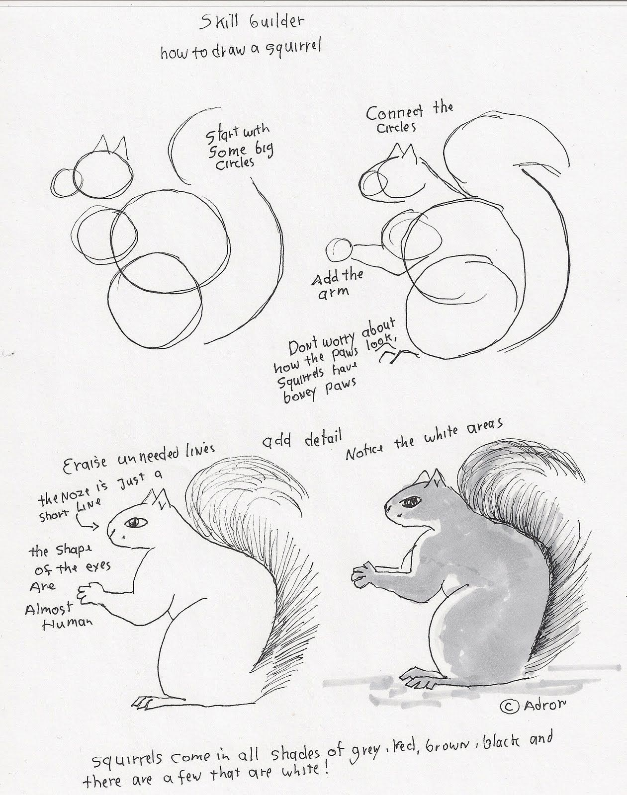 Adron S Art Lesson Plans How To Draw A Squirrel Lesson