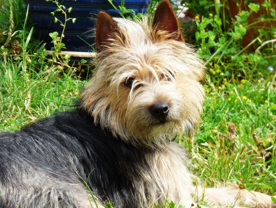 dog, garden, sun Dog training barking, Training your dog