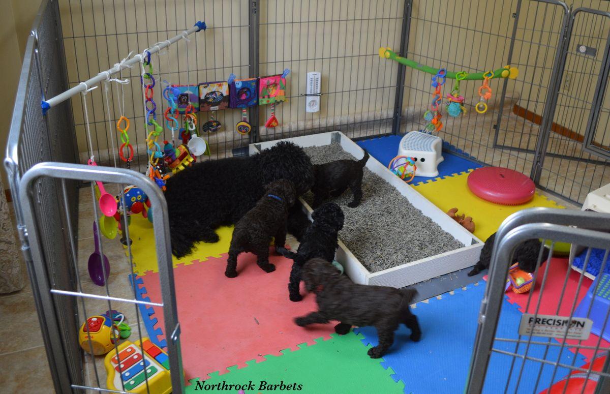 Barbet Basket Puppy Litter Puppy Playpen Puppy Pens