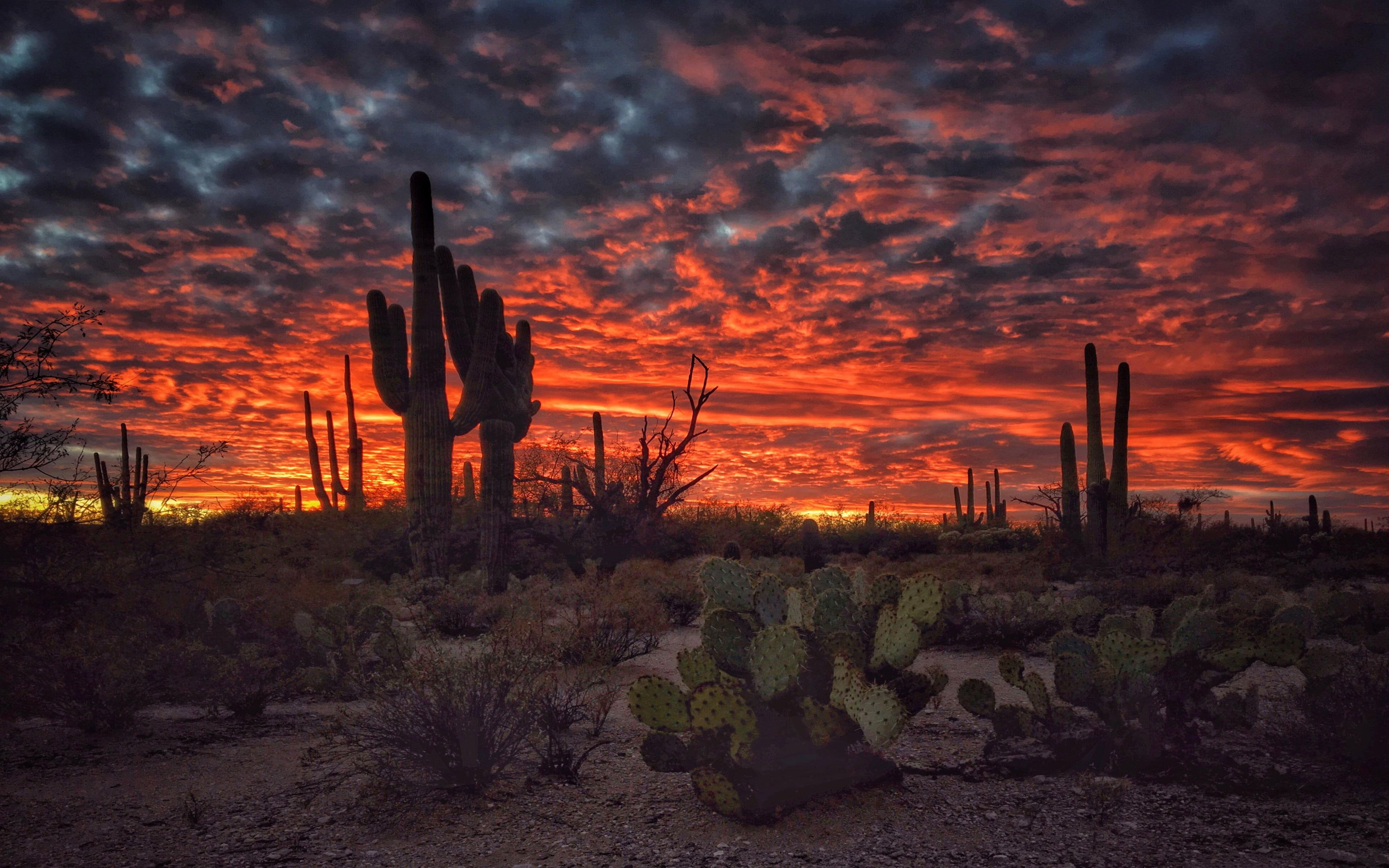 Tucson Arizona Sunset Flaming Sky Desert Landscape With Cactus Desktop Hd Wallpapers Landscape Wallpaper Wallpaper Nature Flowers Beautiful Landscape Wallpaper Hd wallpaper cacti evening sunset desert