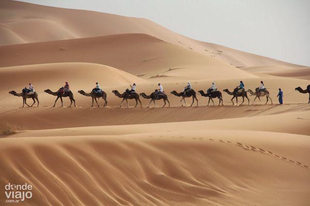 Caravana De Camellos En El Desierto Del Sahara En Marruecos Viajes Travel Turismo Viajar Lugares Beduinos Marruecos Viajes