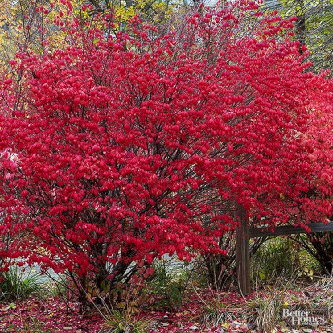 Beautiful fall flowers to plant in your garden 78 best fall flower flower impressive beautiful fall izmirmasajfo Image collections
