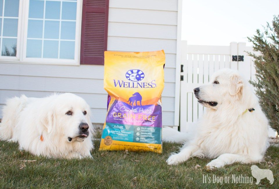 Pet Blogger Bloopers Round Up Great Pyrenees Great Pyrenees Dog