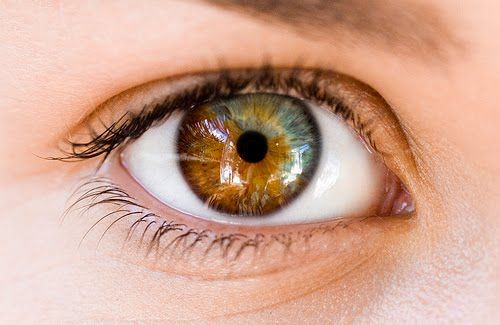 heterochromia iridum in anatomy heterochromia refers to a. Black Bedroom Furniture Sets. Home Design Ideas