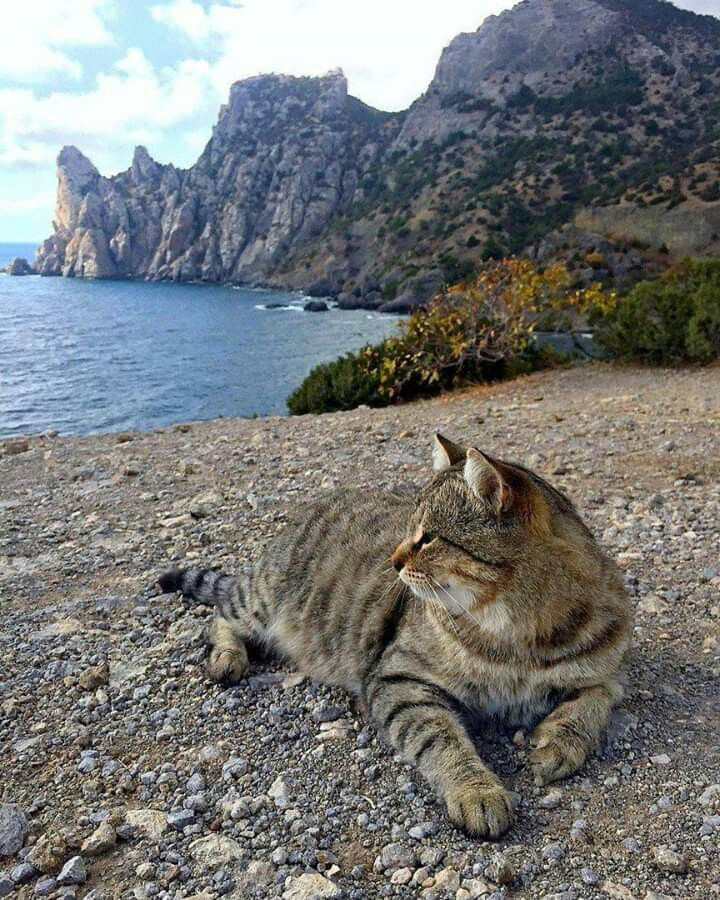 Pin by Willa Mann on Красота для души Best cat litter