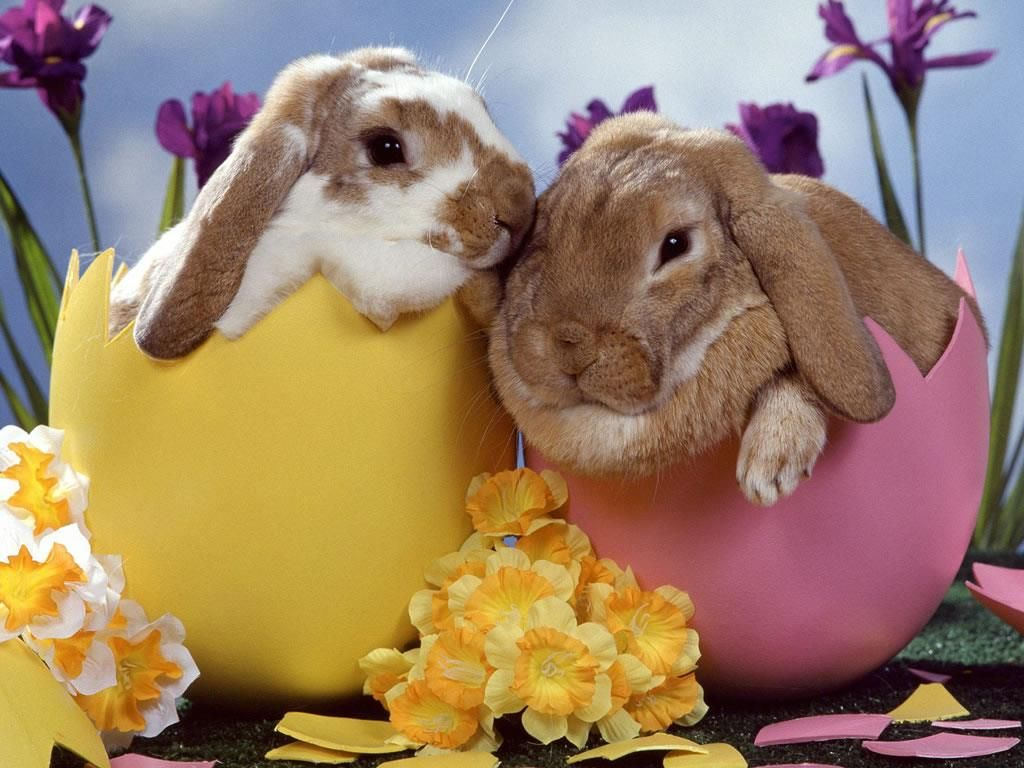 Easter is all about getting knocked up easter adorable animals