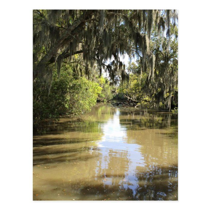 Straight out of Princess and the Frog, the Louisiana Bayou.