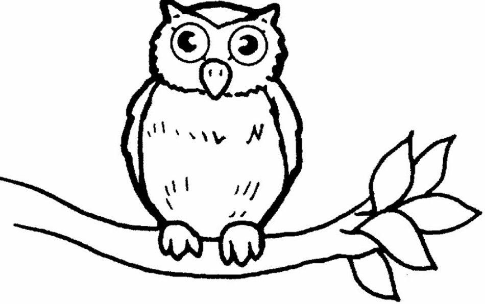 Hasil Gambar Untuk Gambar Burung Untuk Diwarnai Anak Paud Burung