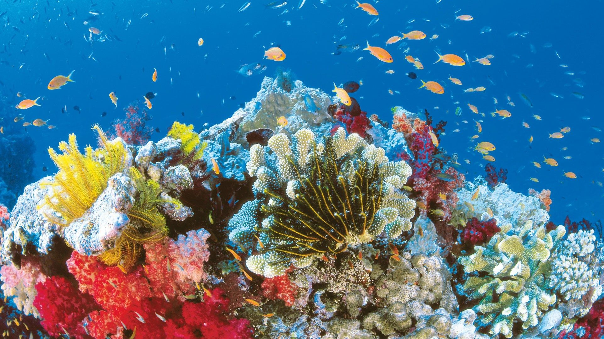 Hd wallpaper environment - High Resolution Barrier Reef Hd Wallpaper 1920x1080