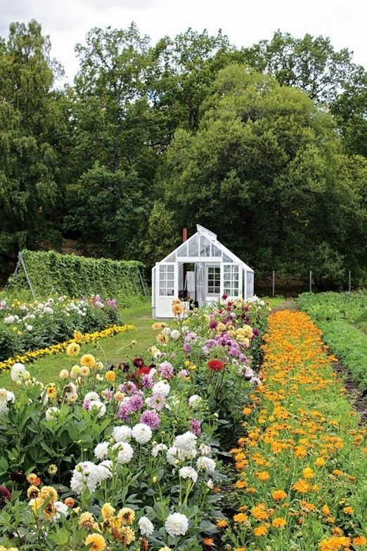 How To Grow Your Own Cut Flowers U2013 What To Grow.