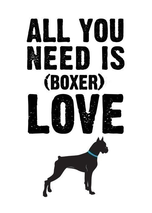 All you need is (boxer) love.