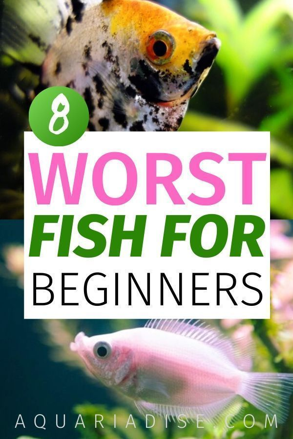 The 8 worst beginner fish | Saltwater aquarium setup ...