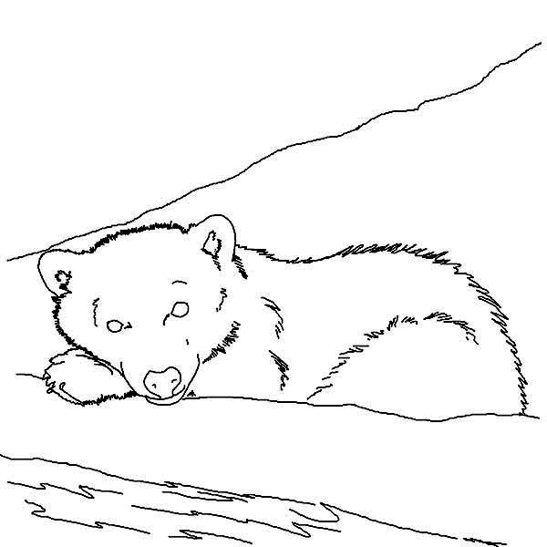 Arctic Animals Sleeping Polar Bear In Arctic Animals Coloring Page Arctic Animals Animal Coloring Pages Polar Animals