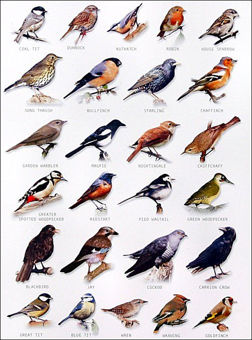 Very Good Tips Each New Month On Keeping A Well Stocked Winter Garden For The Birds To Stay Bird Chart
