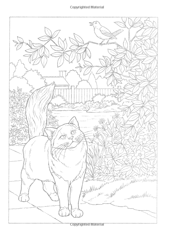 World Of Cats To Paint Or Color Dover Art Coloring Book John Green 9780486462332 Amazon Com Books Coloring Books Cute Coloring Pages Cat Coloring Page