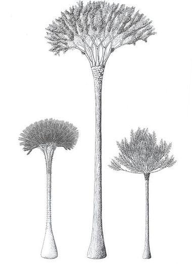 Cladoxylopsid   Ancient tree, Ancient, Prehistoric