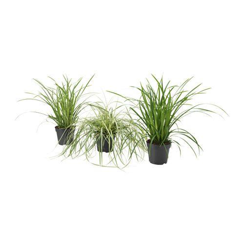 carex plante en pot ikea choisissez pour vos plantes d coratives des cache pots qui. Black Bedroom Furniture Sets. Home Design Ideas